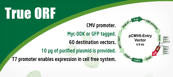 Expression Ready cDNA Clones